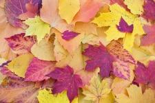 autumn-leaves-1789665_960_720.jpg